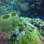 belize-barrier-reef