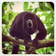 Belize rich in birdlife & howling monkeys