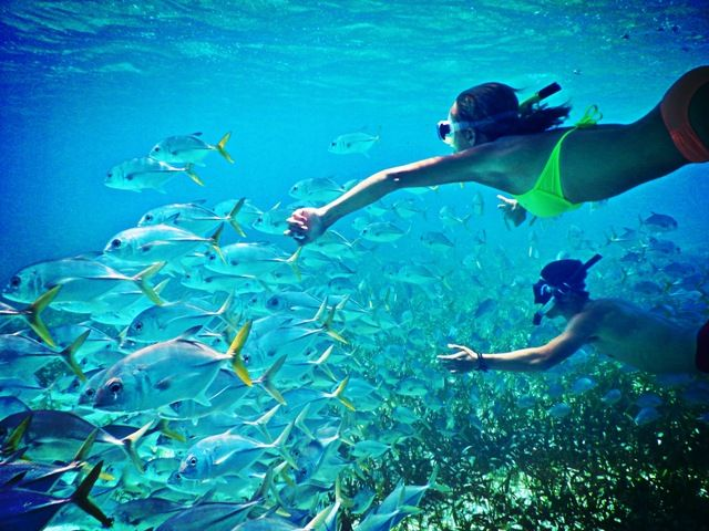 Snorkeling Archives