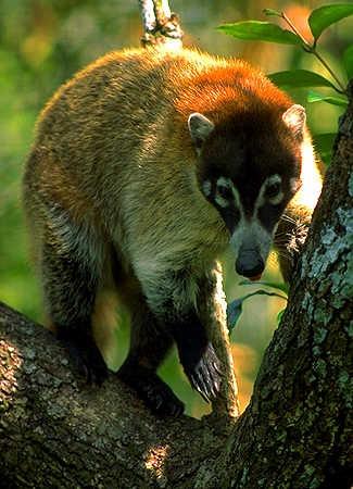 Belize Wildlife Tours