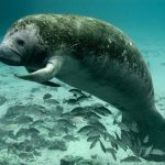 Manatee Tours Belize
