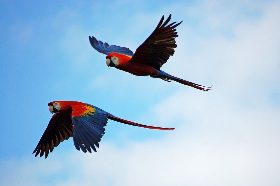 Red Bank Village and the Scarlet Macaw Tour