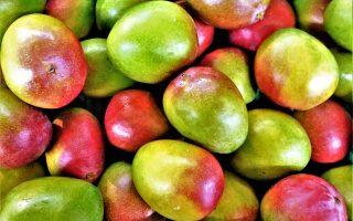 Hopkins Mango Festival