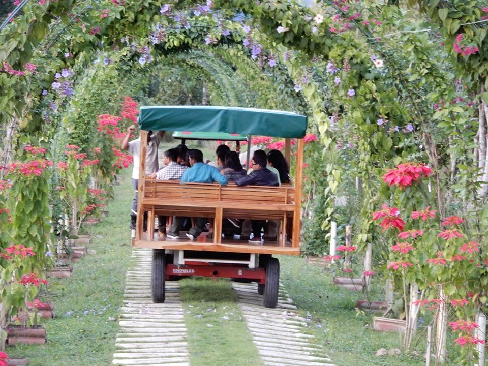 Belize Spice Farm Tours