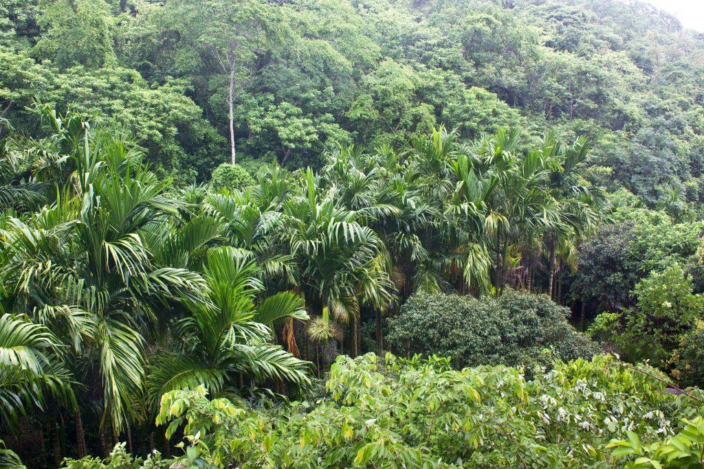 belize jungles