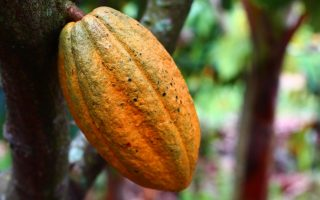 belize chocolate tour