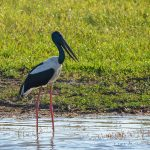 Aguacaliente Wildlife Sanctuary - A Birding Haven in Southern Belize