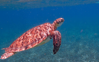 Best Day Trips on the Belize Barrier Reef