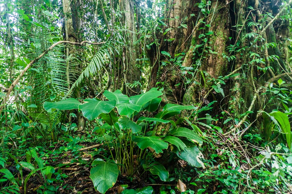 Billy Barquedier National Park in Southern Belize