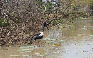 Crooked Tree Wildlife Sanctuary in Belize