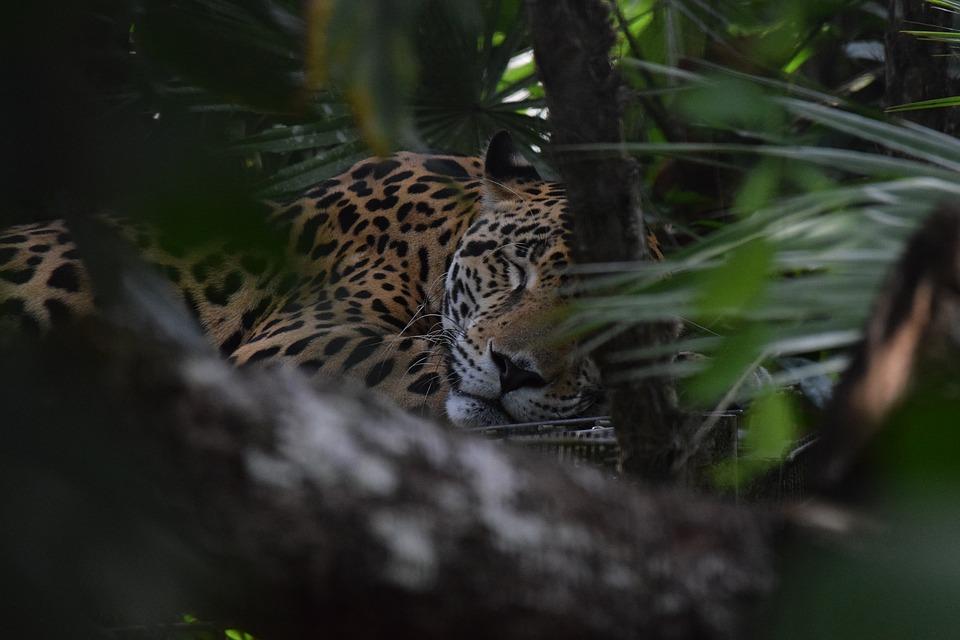 belize jungle adventure packages
