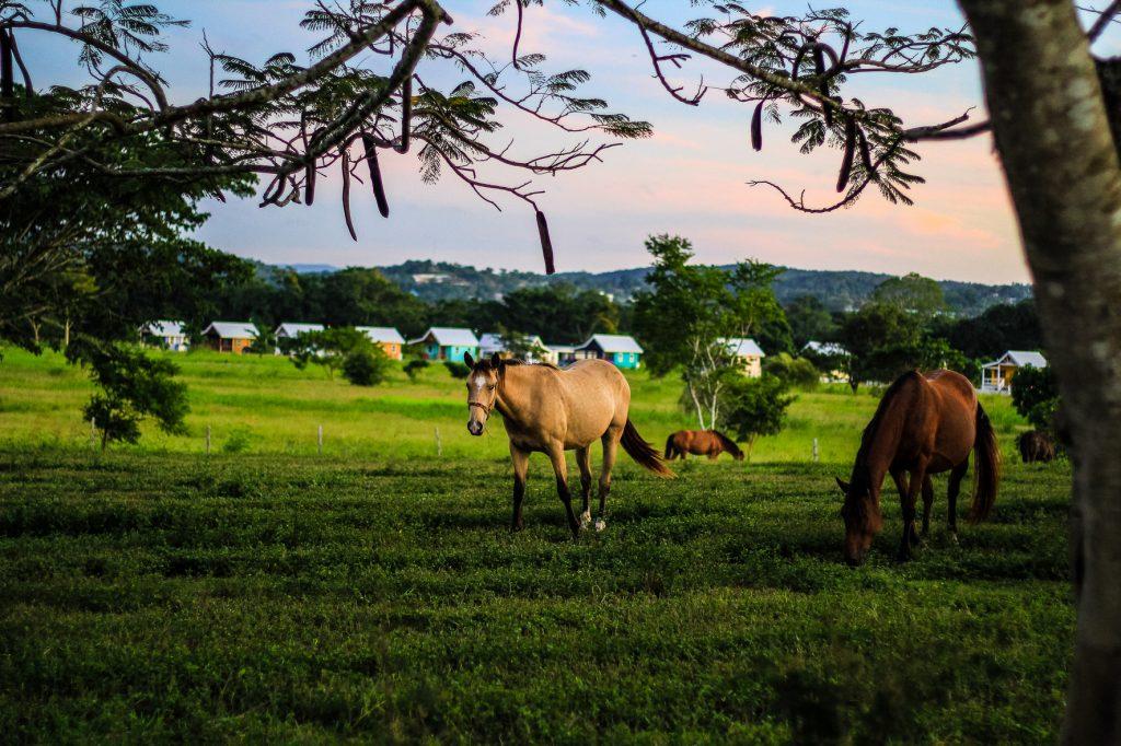 buy land in belize